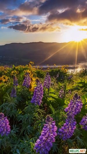 Beautiful widflower in sunrise